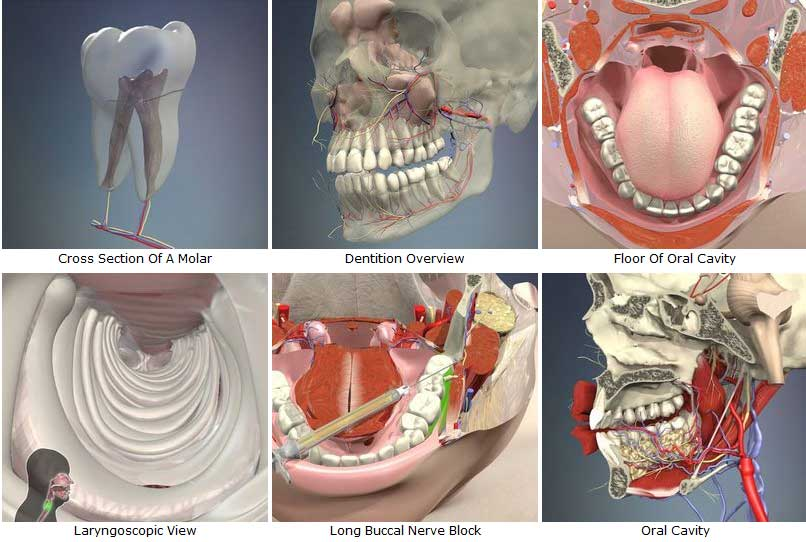 Download 3d Head And Neck Anatomy For Dentistry Free Software